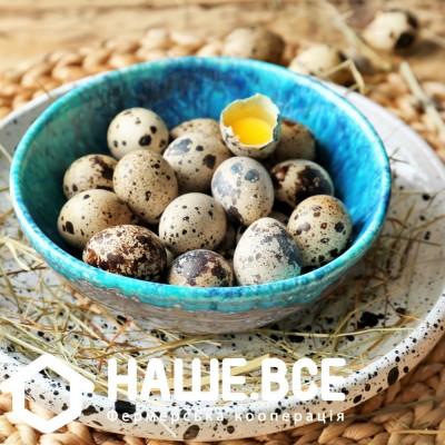 Яйца перепелиные от Татьяны Пантелеймоновой, 20шт