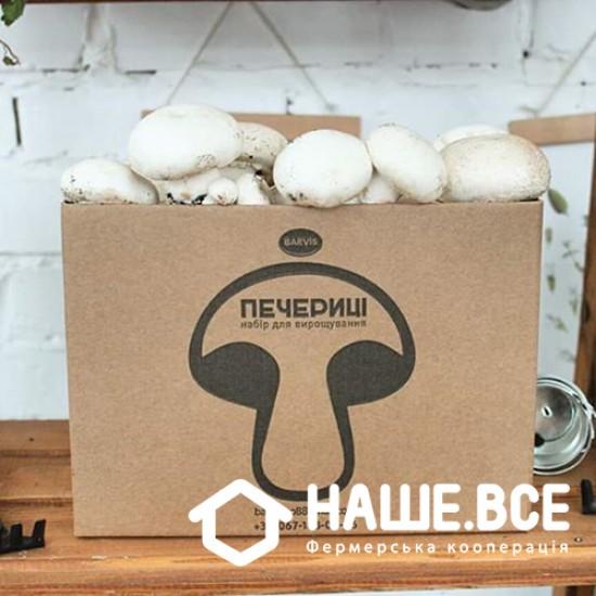 Шампиньоны белые (набор для выращивания дома) от Александры Майдан-Баранюк