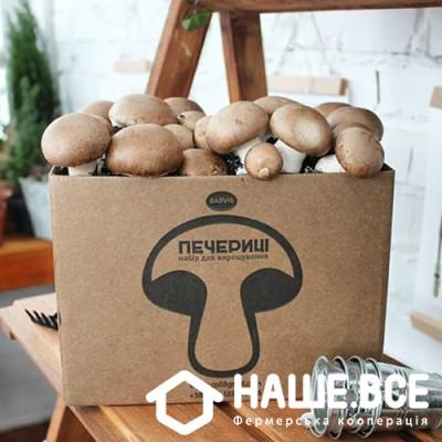 Купить - Шампиньоны королевские (набор для выращивания дома) от Александры Майдан-Баранюк