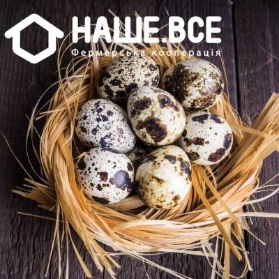 Купить - Яйца перепелиные от Виктора Литвинчука, 20шт