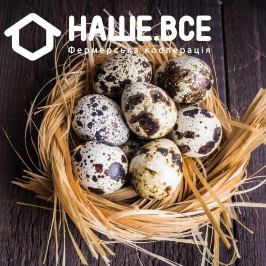 Яйца перепелиные от Виктора Завирюхи, 20шт